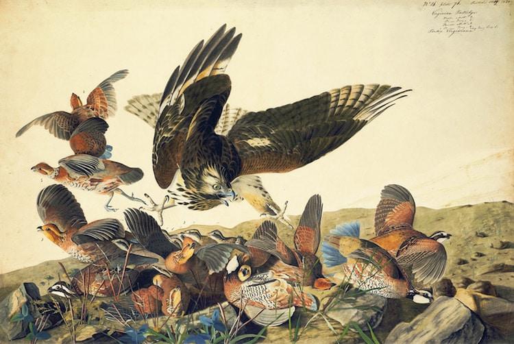 Famous Watercolor Artists John James Audubon
