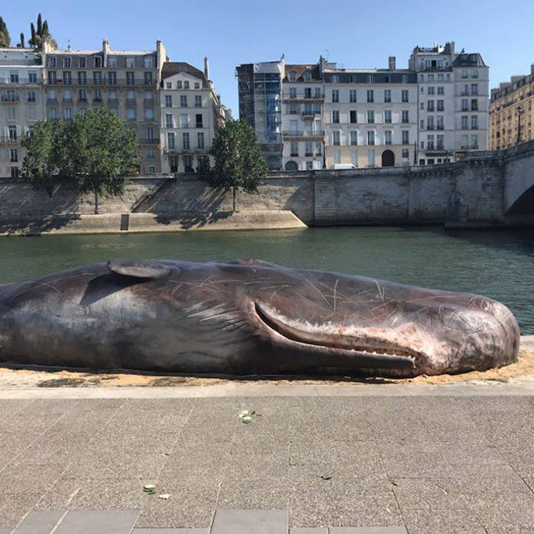 art about beached whales