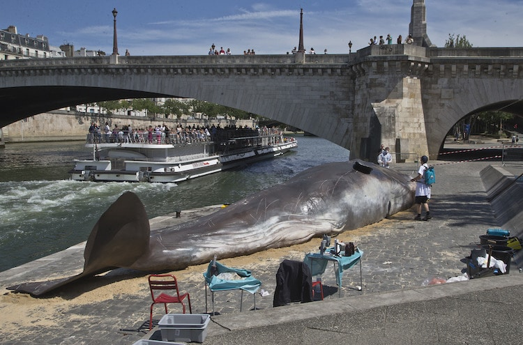 Sperm Whale Sculpture - Captain Boomer Collective