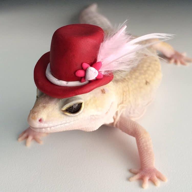 Pet Gecko Wearing Hats