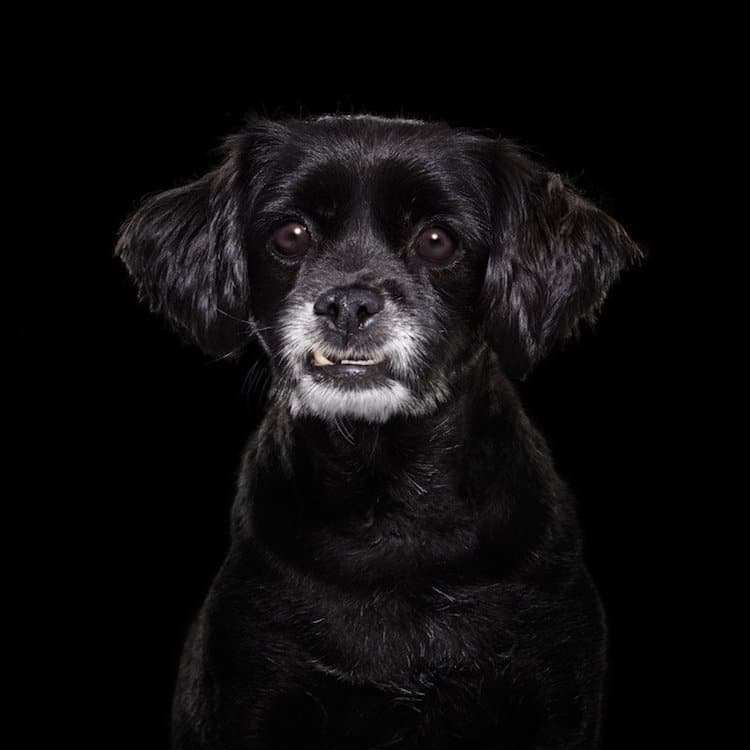 Black Dog Shelter Dog Rescue Dogs Animal Portraits Shaina Fishman