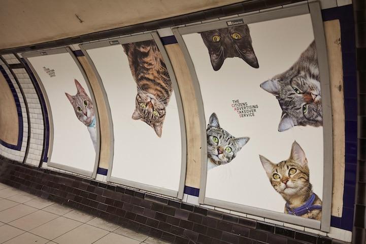 Cat Advertising Cats in Art History