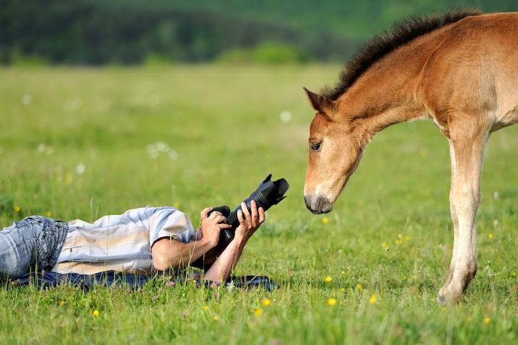 Creative Side Hustle Animal Photography