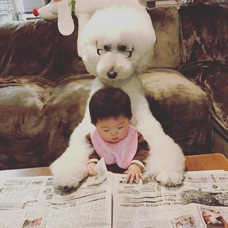 Giant Poodle Pet