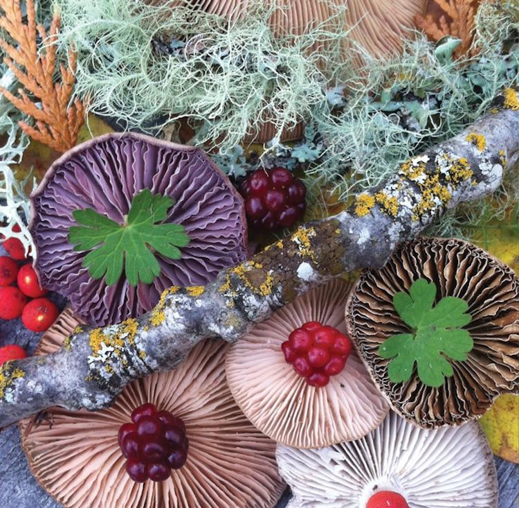 nature-medleys-mushrooms-jill-bliss-10.jpg