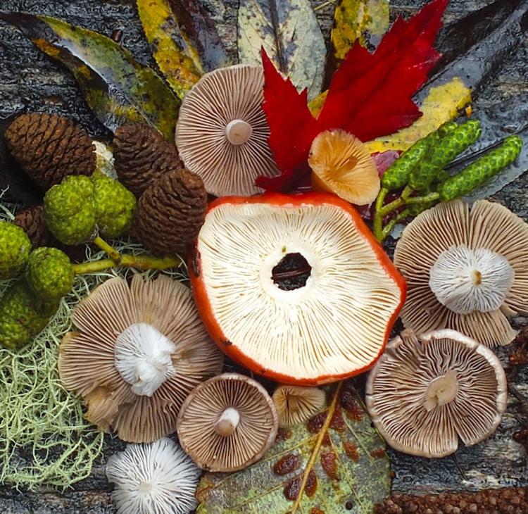 Nature Medleys Mushrooms Nature Photography Jill Bliss