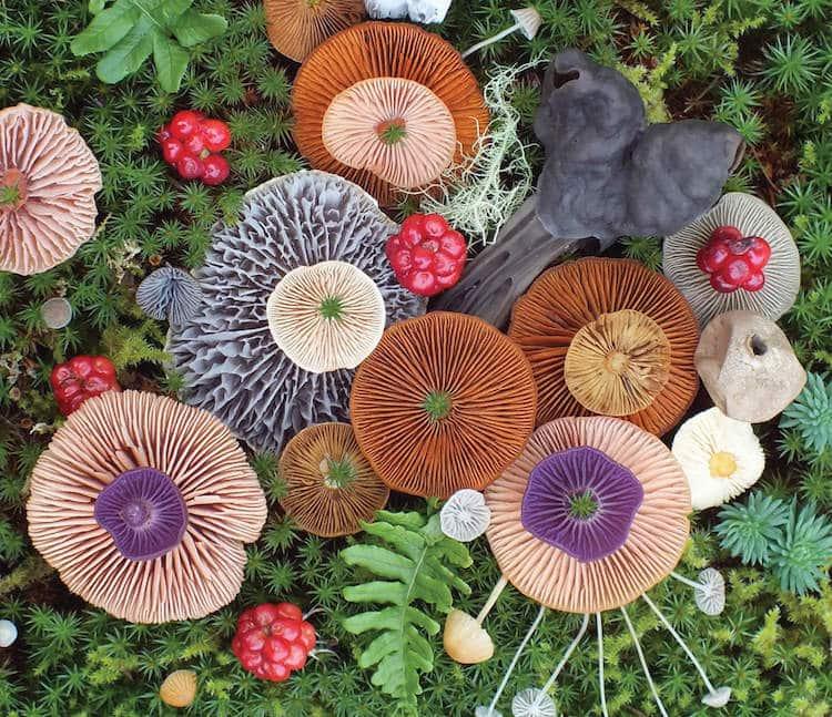 nature-medleys-mushrooms-jill-bliss-5.jpg