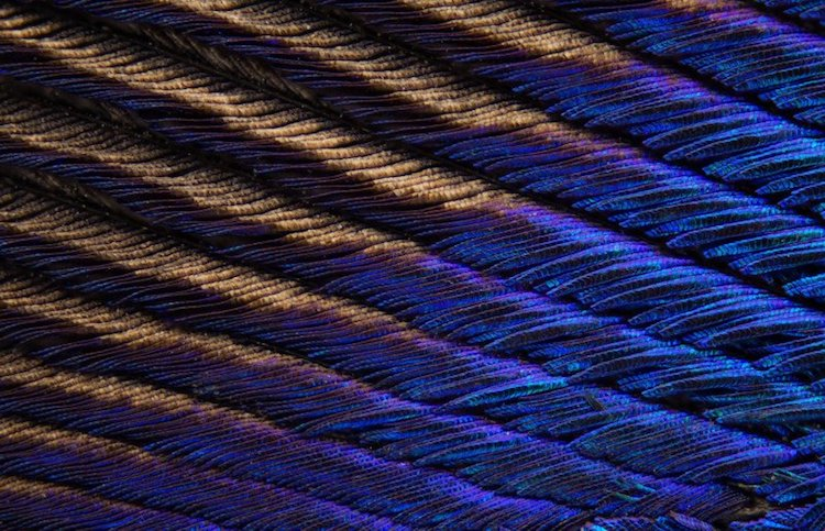 peacock feather macro photos can tuncer