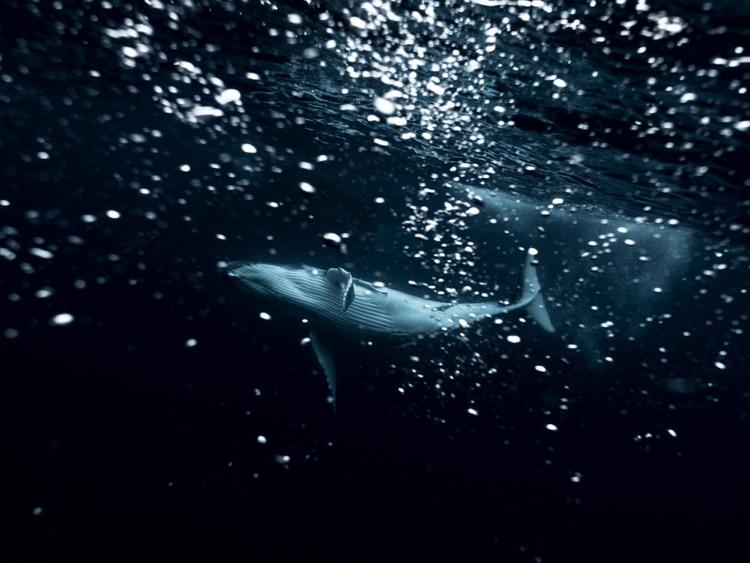 Michaela Skovranova / Mishku / Underwater photography whales