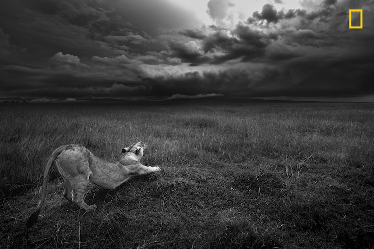National Geographic Nature Photographer of the Year 2017 Early Entries