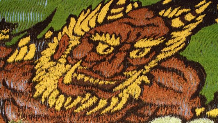 Japanese Rice Paddy Art