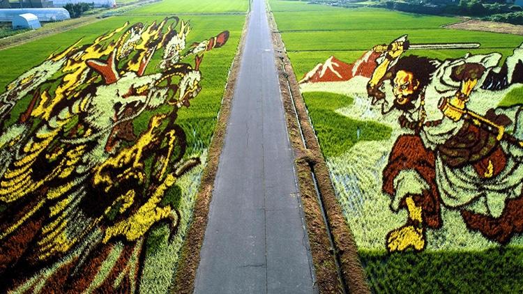 Agricultores Japoneses Plantan Diversas Cepas De Arroz Para Cultivar Campos Ilustrados Con Colores