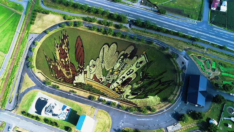 Japanese Rice Paddy Art