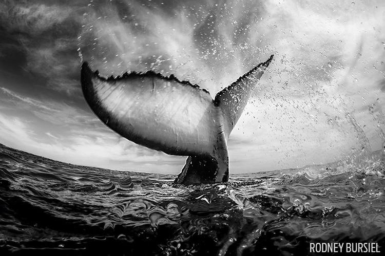 Scuba Diving Magazine Photo Contest 2017
