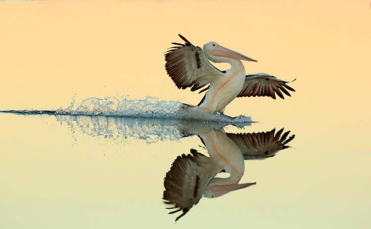 bird photographer contest