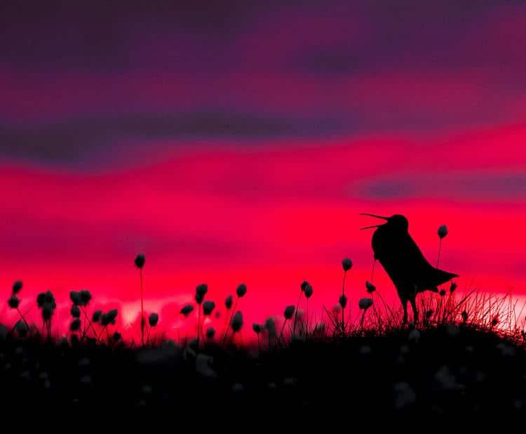 2017 Bird Photographer of the Year
