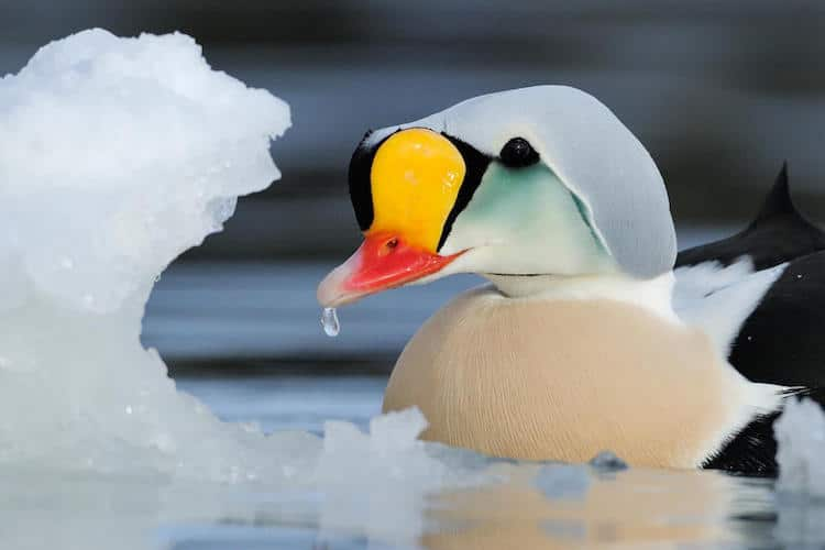 bird photography contest