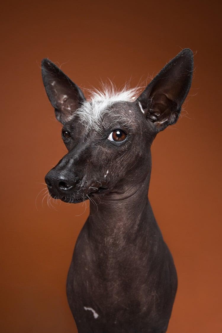 Custom Dog Portraits by Alexander Khoklov