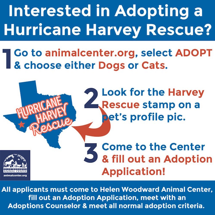Southwest Airlines Shelter Animals Hurricane Harvey Helen Woodward Animal Shelter