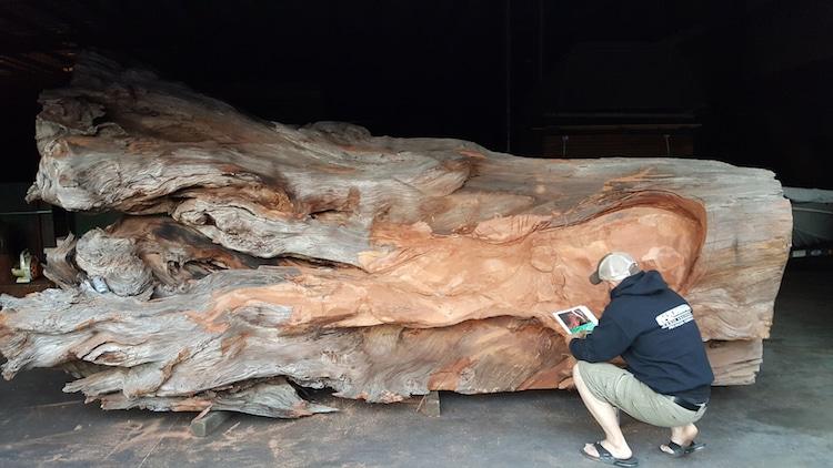 JMS Wood Sculpture - Chainsaw Art