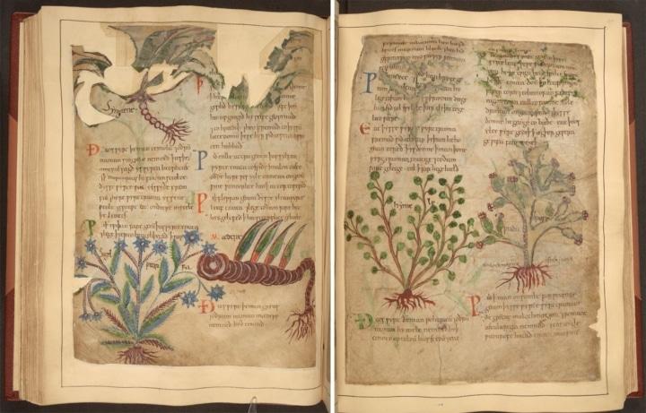 Manuscrito medieval de remedios herbolarios en línea