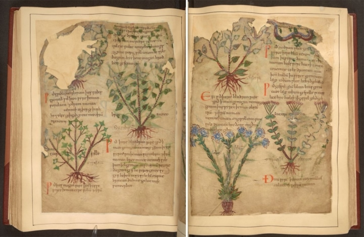 british library digitized manuscript