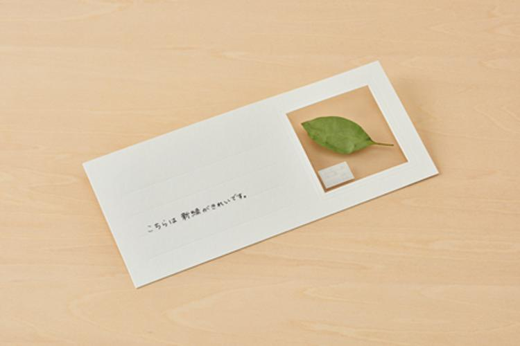 Unique Stationery by Japanese Illustrator Lets you Send Plants by Mail