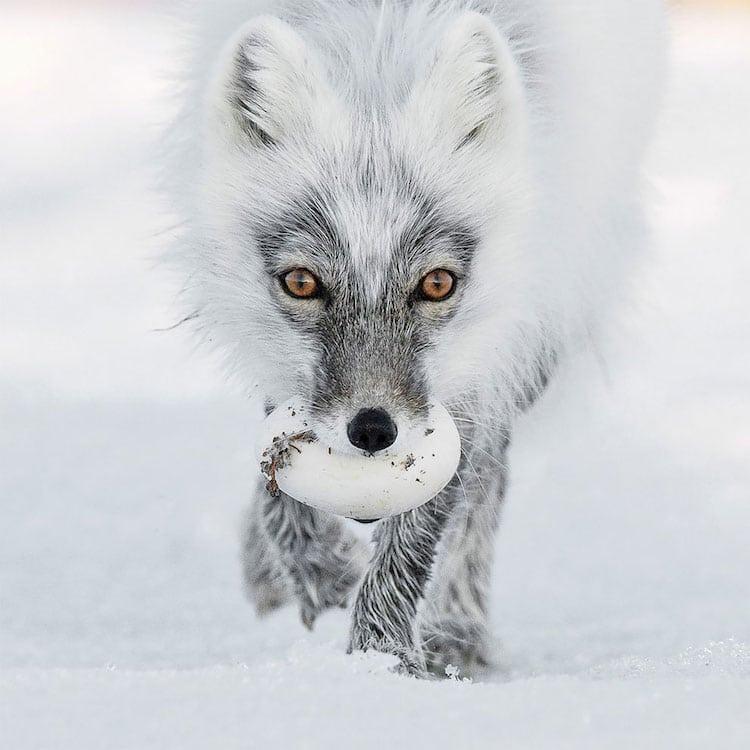wildlife photography contest