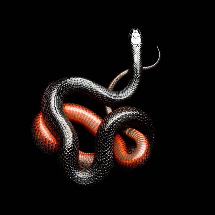 Beautiful Photos Of Snakes By Mark Laita & Surviving A