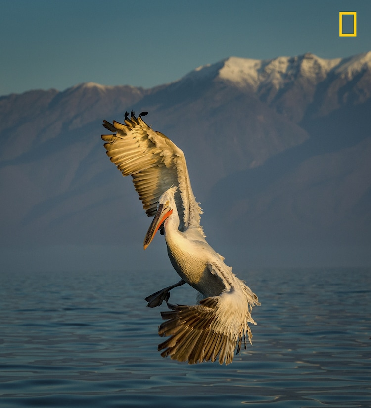 National Geographic Nature Photographer of the Year Entries 2017