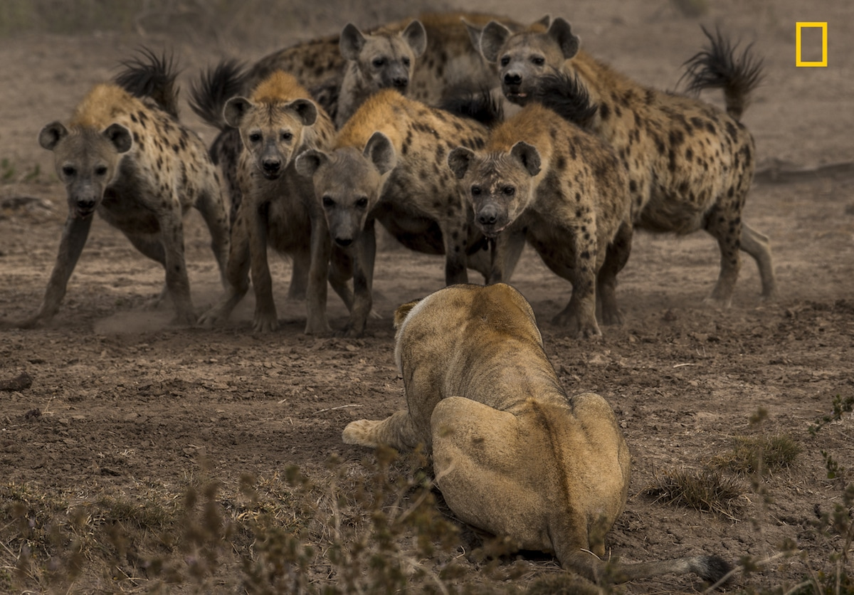 National Geographic Nature Photographer Of The Year Contest 2017