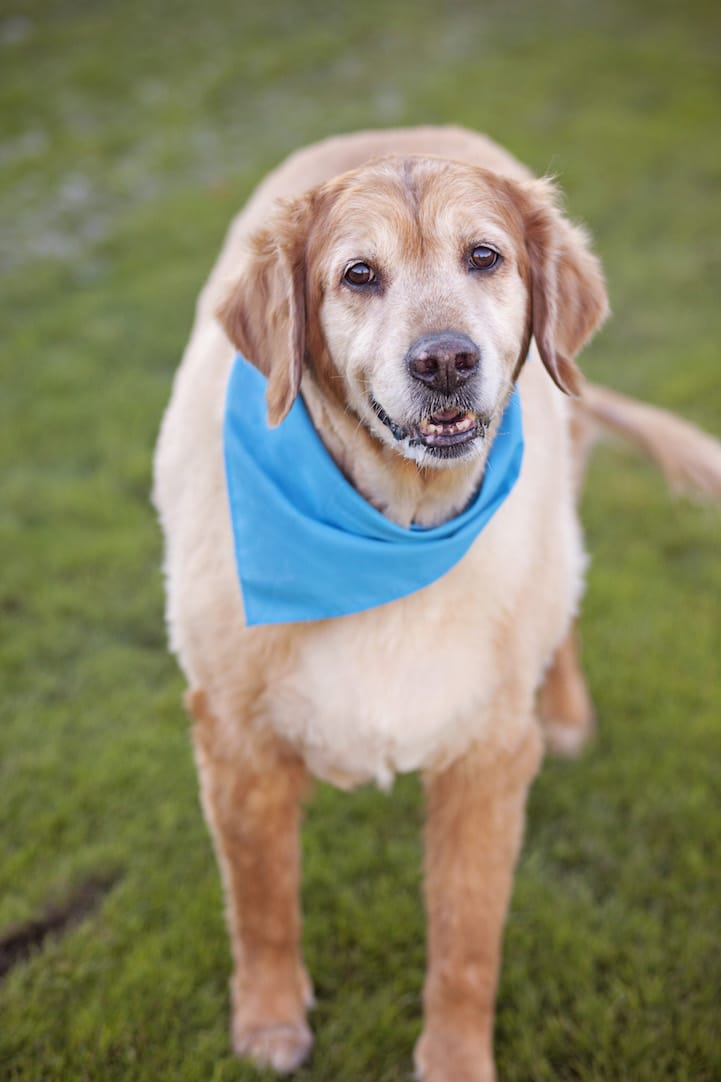 Animal Shelter Dogs Rescue Animals Pet Photos
