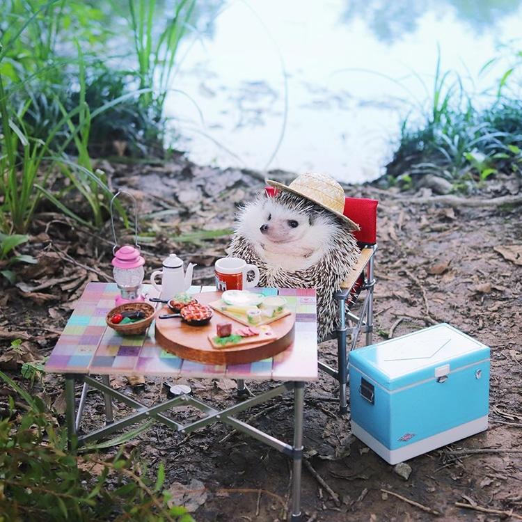 Azuki Tiny Hedgehog Goes Camping