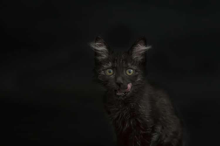 Photos of Black Cats by Casey Elise Christopher