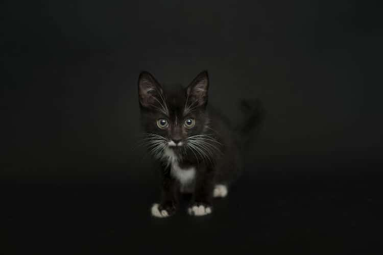 Black Cat Photos by Casey Elise Christopher