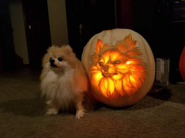 Dog Pumpkin Carving