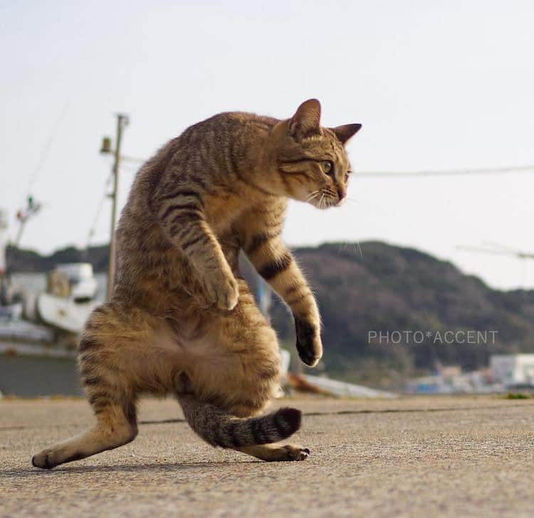 Ninja Cats by Hisakata Hiroyuki