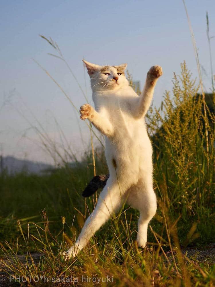 Action Shots Cats