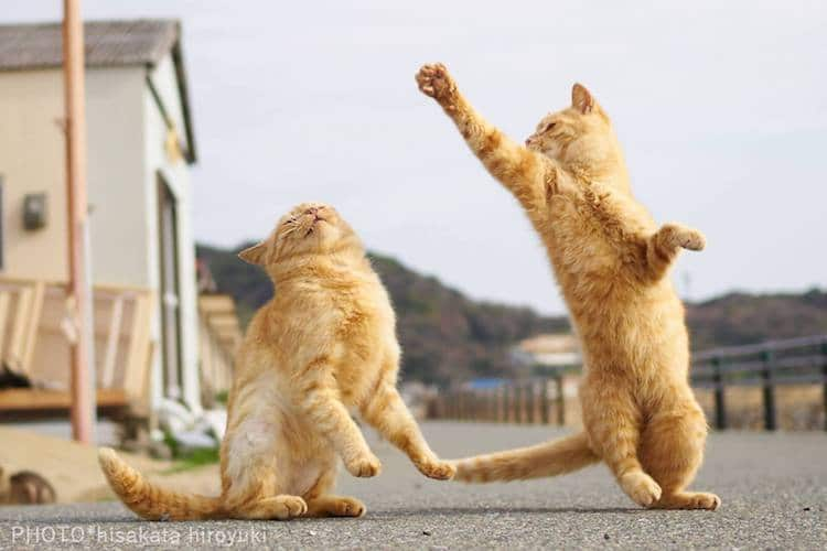 Action Shots Cats