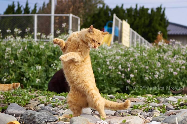 Action Shots Cats by Hisakata Hiroyuki