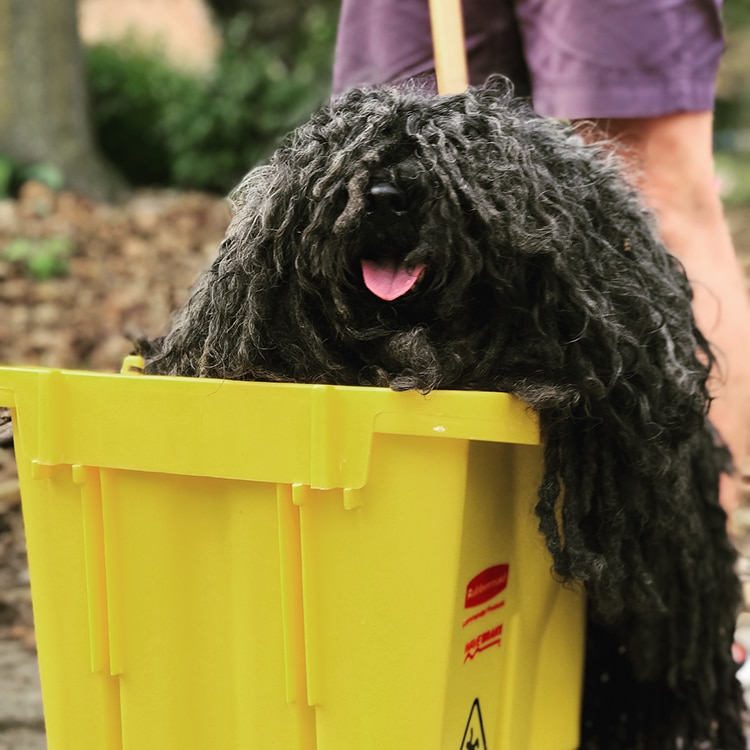 Dog Halloween Mop Costume