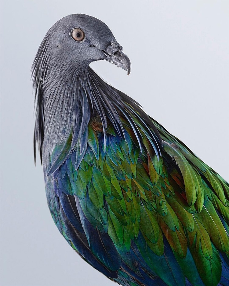 Leila Jeffreys Colorful Bird Portraits