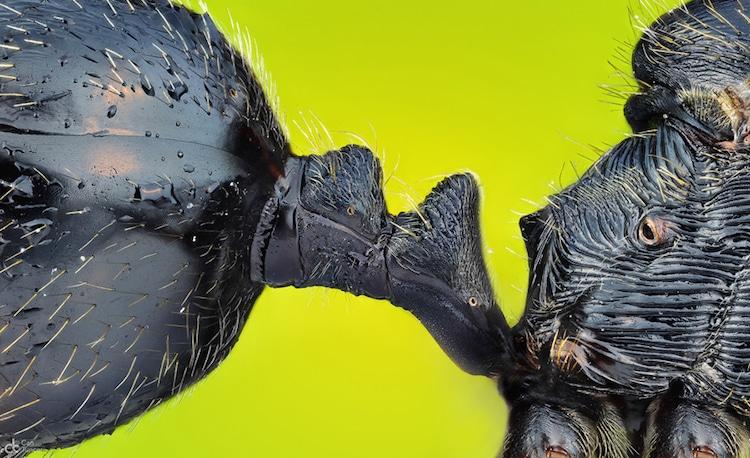 Nikon Small World Photomicrography 2017 Winners