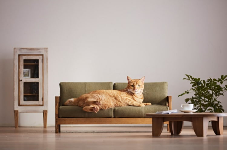 Okawa City Cat Furniture