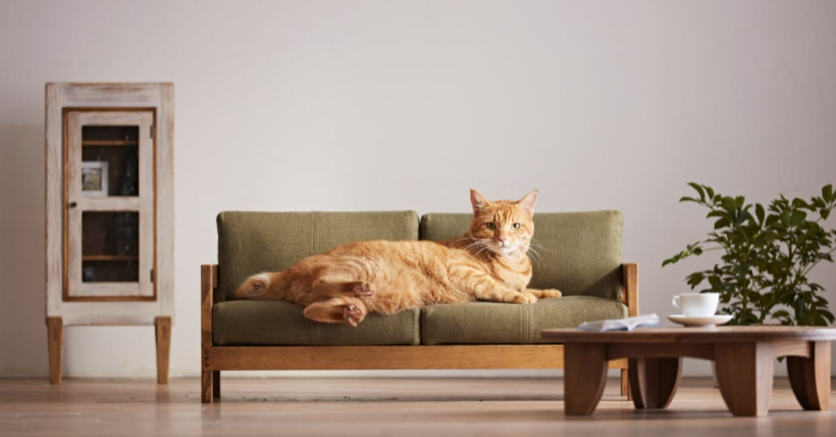 Anese S Release A Range Of High Quality Cat Furniture