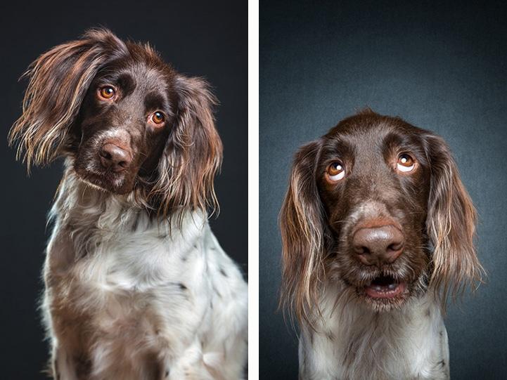Shelter Dogs Elke Vogelsang
