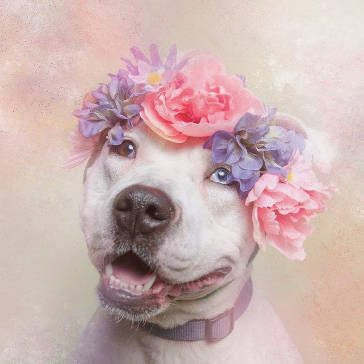 Shelter Dogs Flower Power Sophie Gamand