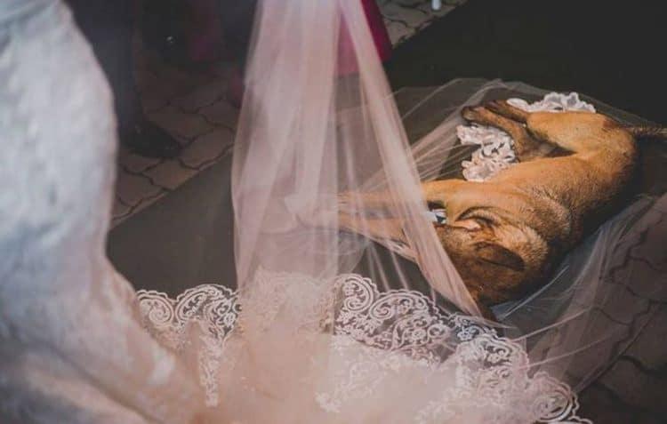 Stray Dog Wedding Crasher
