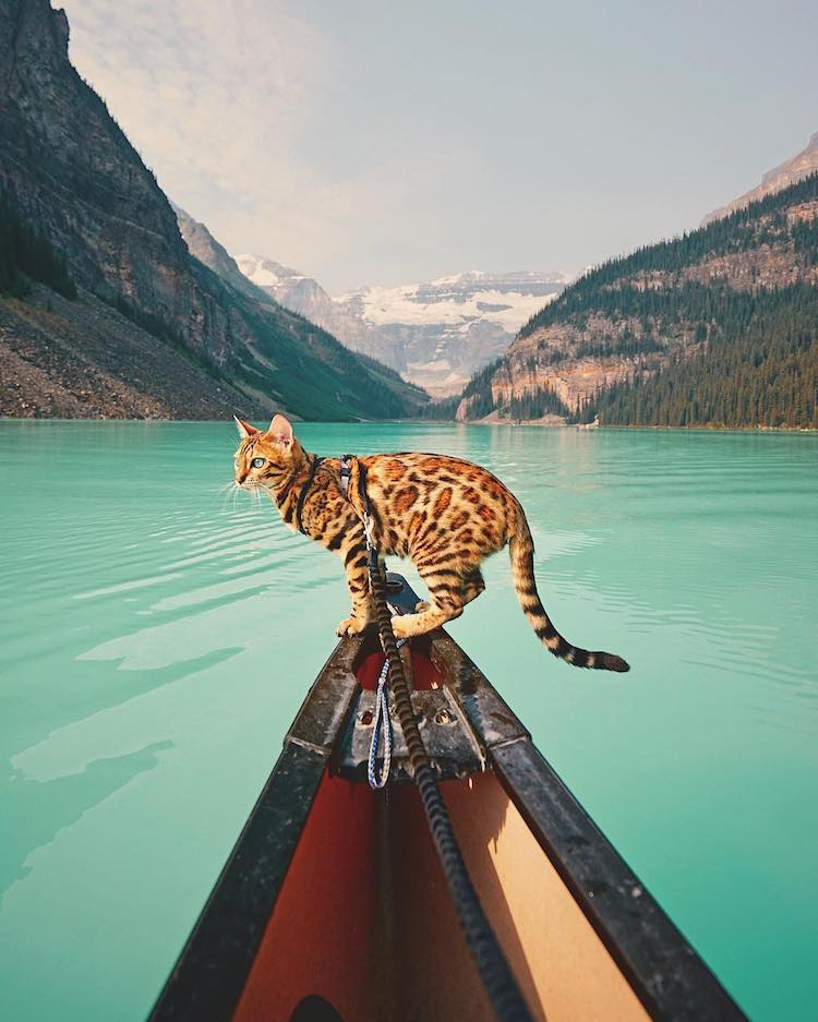 Traveling with a Cat Named Suki