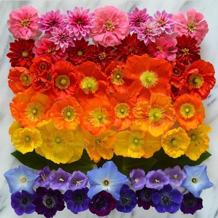 Unconventional Floral Arrangements Flower Arrangements Flower Art Botanical Art